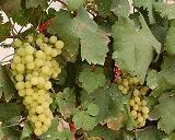 מצגת יינות אדומים מרמת נגב